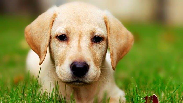 Lietuviai sarginius šunis keičia į šunis-draugus