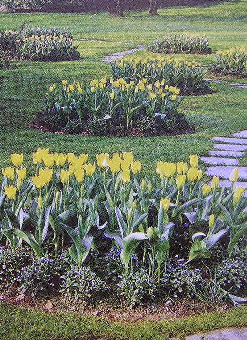4 pav. Soliterai iš geltonų tulpių