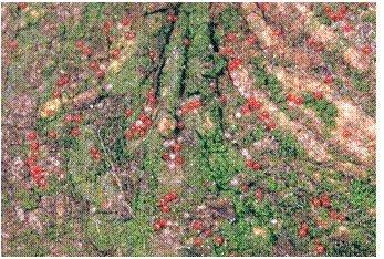2.1.3 pav Rausvųjų sodinių erkių žiemojantys kiaušinėliai ant žievės;